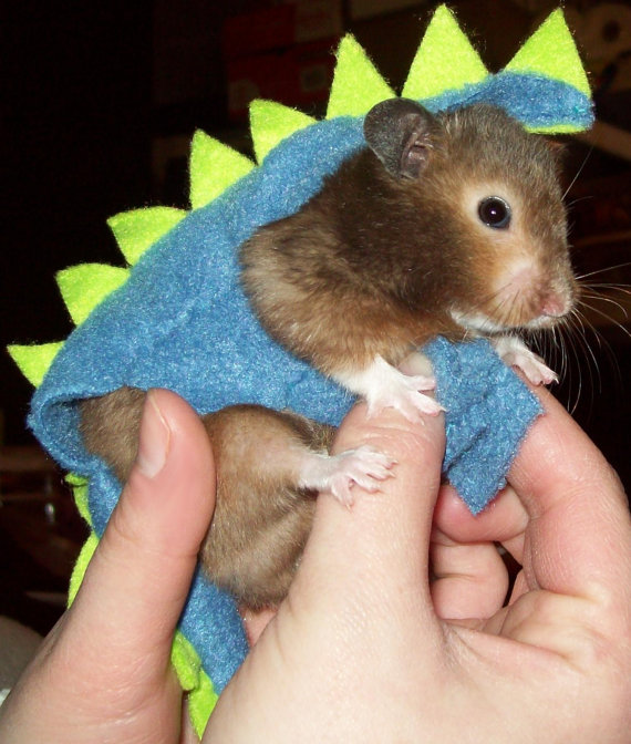 Dinosaur Costume for Hamster (Syrian)